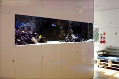 ADn saltwater aquarium at the lobby of a company.