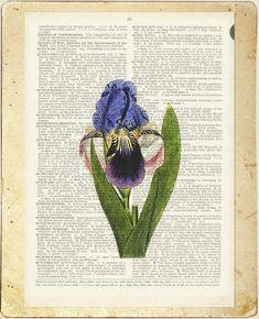 Iris vintage artwork iris flower printed on vintage by FauxKiss