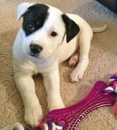 Luna the Mixed Breed