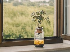 The coolest Mason jar you'll ever own. A non-electrical eco-system of life between fish and plant. And boy you'll love it!