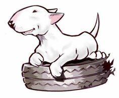 Bull terrier / Dog's