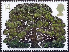 """A reminder that many trees, especially our ca native oaks are """"lollipopped""""-pruned into unreal shapes. Cottonwoods meet the same fate...David Gentleman's unadopted Oak Tree design."""