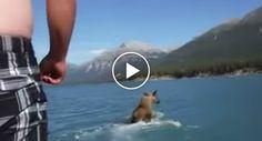 Bêbado Salta De Barco Para Cima De Alce http://www.desconcertante.com/bebado-salta-de-barco-para-cima-de-alce/