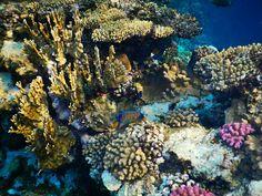 Coral reef. Egypt, port ghalib