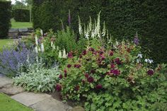 This is a great combination! 'Munstead Wood' in the centre backed by foxgloves.
