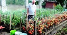 How To Water Indoor Plants – The Gardening Spot