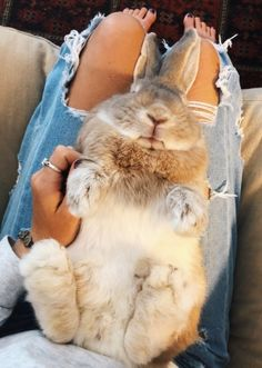 ✰V S C O:andreamejicano ✰ Cute Little Animals, Cute Funny Animals, Cute Dogs, Cute Baby Bunnies, Cute Animal Pictures, Cute Creatures, Animals Beautiful, Animals And Pets, Fur Babies