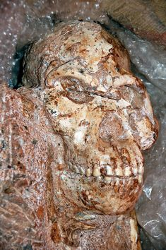 After 13 years of meticulous excavation of the nearly complete skeleton of the Australopithecus fossil named Little Foot, South African and French scientists have now convincingly shown that it is probably around 3 million years old