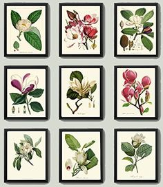 Magnolia Botanical Print Set of 9 Antique Beautiful Pink Violet White Blooming Flowers Garden Tree Plant Nature Home Room Decor Wall Art Unframed. Beautiful set of 9 prints based on antique botanical illustrations. Wonderful details, colors and natural history feel. • The prints measure 4x6, 5x7, 8x10, or 11x14 inch. based on your selection come with a white border for easy framing. • Printed on professional artist archival matte paper. • The prints are part of Amazon Handmade program and...