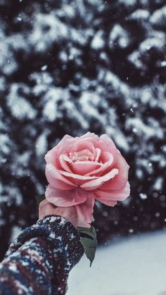 Photo by Brandon Woelfel. I love his work Tumblr Wallpaper, Flower Wallpaper, Screen Wallpaper, Winter Wallpaper, Flower Backgrounds, Wallpaper Backgrounds, Tumbler Backgrounds, Brandon Woelfel, Fashion Wallpaper
