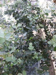 植えてはイケナイ…( ̄▽ ̄; - happy-go-lucky House Plants Decor, Plant Decor, Herb Garden, Home And Garden, Garden Plants, Dappled Light, Artificial Plants, Garden Styles, Garden Furniture