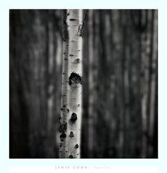 Equilibrium Fine-Art Print by Jamie Cook at FulcrumGallery.com