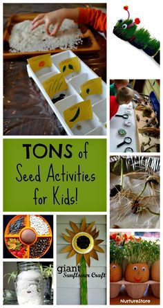 TONS of Seed Activities for Kids Totally awesome seed activities for kids! This is how preschoolers learn about science. Gardening for kids is the best! Seed Activities For Kids, Spring Activities, Science Activities, Science Experiments, Seed Experiments For Kids, Seed Crafts For Kids, Seed Art For Kids, Nature Activities, Science News