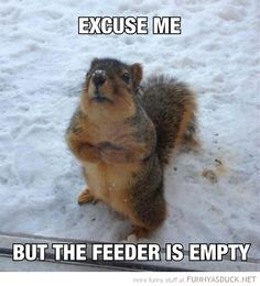 Excuse me the feeder is empty! This is exactly what the squirrels we feed at my work do lol