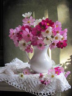 Flowers arrangements vase colour new Ideas Beautiful Rose Flowers, Beautiful Flower Arrangements, Amazing Flowers, Floral Arrangements, Flower Images, Flower Pictures, Flower Art, Cosmos Flowers, Spring Flowers