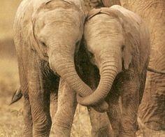 Together For Forever ~Elephants