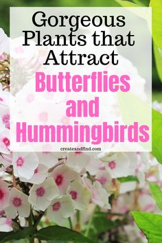 Flower Garden Plants to attract butterflies and hummingbirds - easy to grow varieties that'll give gorgeous color and food for these beautiful creatures Flowers That Attract Hummingbirds, How To Attract Birds, Attracting Hummingbirds, Hummingbird Flowers, Hummingbird Garden, Gardening For Beginners, Gardening Tips, Organic Gardening, Vegetable Gardening