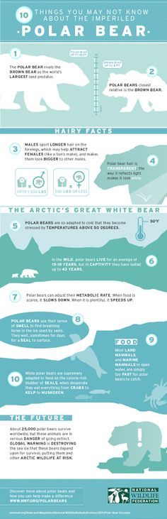 An infograph about polar bears. It has some fascinating facts and statistics about these endangered animals. Other than the statistics, the overall design of the piece is very nice. It is organized very well and the cool, light colors fit well with the th Arctic Animals, Cute Animals, Save The Polar Bears, Polar Bear Facts, Arctic Circle, Marine Biology, Animal Facts, Science, Wildlife Conservation