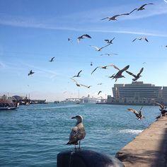 #barcelona #spain #quay #promenade #mediterranean #sea #birds #amazing #viewpoint #blue #sky #nice #weather #барселона #испания #набережная #средиземное #море #птицы #много #птиц #голубое #небо #отличный #наблюдательный #пункт #отличная #погода Прогуливаясь по набережной в Барселоне нас неожиданно атаковала стая говорливых птиц кружащих над водой в поиске еды  Walking along the promenade in Barcelona we were suddenly attacked by a flock of talkative birds circling over the water and…