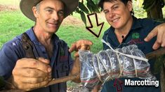 Tutorial: Marcotting in 5 steps (Air Layering) P Garden, Garden Works, Edible Garden, Growing Fruit Trees, Growing Flowers, Container Gardening, Gardening Tips, Flower Gardening, Air Layering