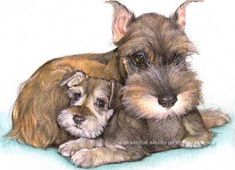 "Schnauzers art""Aleksandar Alexov: Animal drawings are my artistic passion and I do my best to inspire them live and emotion. Cute Puppies, Cute Dogs, Dogs And Puppies, Rottweiler, Animals And Pets, Cute Animals, Schnauzer Puppy, Miniature Schnauzer, Dog Items"