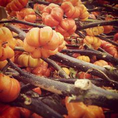 Farmers Market www.elisazunder.de
