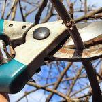 Slivoně vyžadují poměrně důkladnou prořezávku, pokud mají optimálně plodit a těšit se co nejlepšímu zdraví. Na počátku je třeba zapěstovat správný tvar koruny, zákrsky poté udržovat zmlazovacím řezem. Pruning Shears, Garden Tools, Pergola, Gardening, Gardening Scissors, Yard Tools, Outdoor Pergola, Lawn And Garden, Horticulture