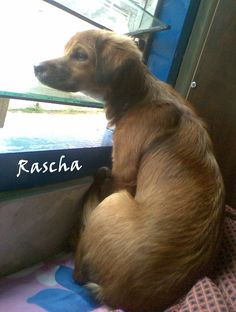 RaschaQ syg