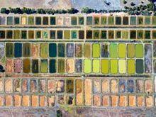 Каштан Ферма в Caple, M1007Ph