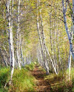 Jessop Path, Acadia National Park