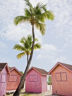 pink huts and palm trees
