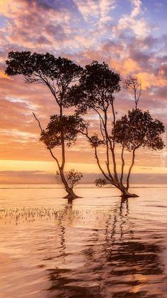 Drzewa w jeziorze - Tapeta na telefon Framed Wallpaper, Iphone Wallpaper, Winter Beauty, Beautiful Sky, Winchester, Sunset, Pictures, Photos, Allman Brothers