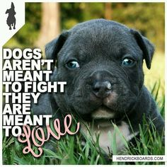 Love bully dogs Beautiful Dogs, Animals Beautiful, Bully Dog, Raining Cats And Dogs, Funny Captions, How Big Is Baby, Animals Of The World, Mans Best Friend, Puppy Love
