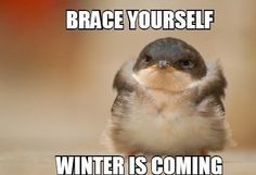Funny-Quotes-about-Winter-Coming-9 - A Fun Blog