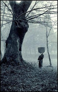 """WOMAN WITH BASKET ON HEAD STOPS TO CHAT WITH AN OLD TREE BEFORE MOVING INTO THE FOG"" 大豆生田"