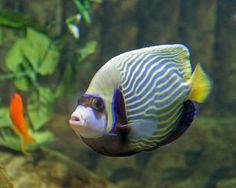 Bluereef Aquarium Hastings tropical fish sunglasses?   Flickr - Photo Sharing!