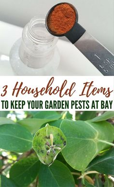 3 Household Items to Keep Your Garden Pests at Bay - Learn this secret weapon (or rather, three) right from my pantry to keep these pesky pests under control.