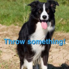 A stick, a ball, a frisbee, an apple...anything, just THROW something!