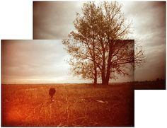Balazs Sprenc: dog and tree