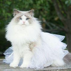 Aurore la princesse chatte - http://www.2tout2rien.fr/aurore-la-princesse-chatte/