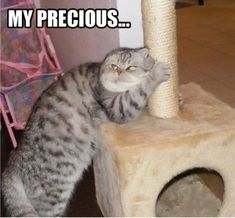 My Precious...just bought my cats a pole scratching post...pretty sure one of them resembled this.