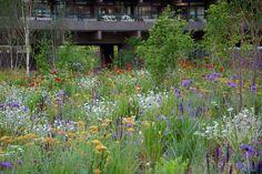 Beech Gardens. Barbican. Nigel Dunnett