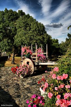 Cércio, Bragança #Portugal #PortugalFlowerPower