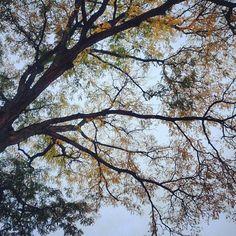 Hello fall #ohiostate #fall #leaves