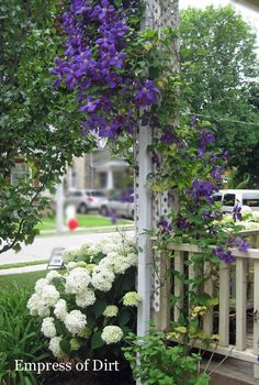 Clematis at the front porch