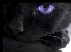 Puppy Dogs & Cats » Black Cats With Purple Eyes