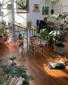 Downside Risk of Easy Houseplants for Indoor House Ideas If you opt to sell . The Downside Risk of Easy Houseplants for Indoor House Ideas If you opt to sell your house, a door which requires regular maintenance in addition to b… House Ideas, Dream Apartment, Apartment Goals, Apartment Interior, Small Cozy Apartment, Couples Apartment, Apartment Hacks, Interior Livingroom, Apartment Design
