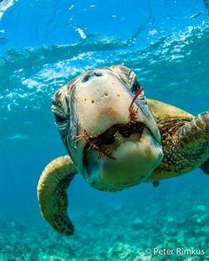 Top 10 Snorkeling Sp