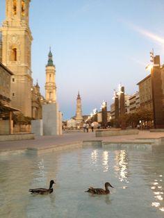 Patos en la fuente de la plaza del pilar de Zaragoza.