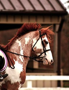 """I know this picture is everywhere, but this horse is so beautiful! An amazing and glorious """"Redhead""""."""